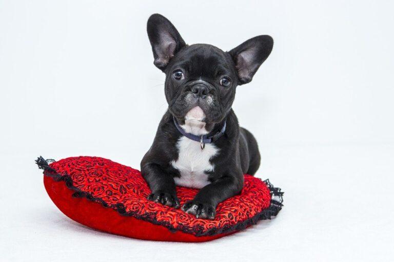 Il Cane: miglior amico o SCHIAVO dell'uomo?
