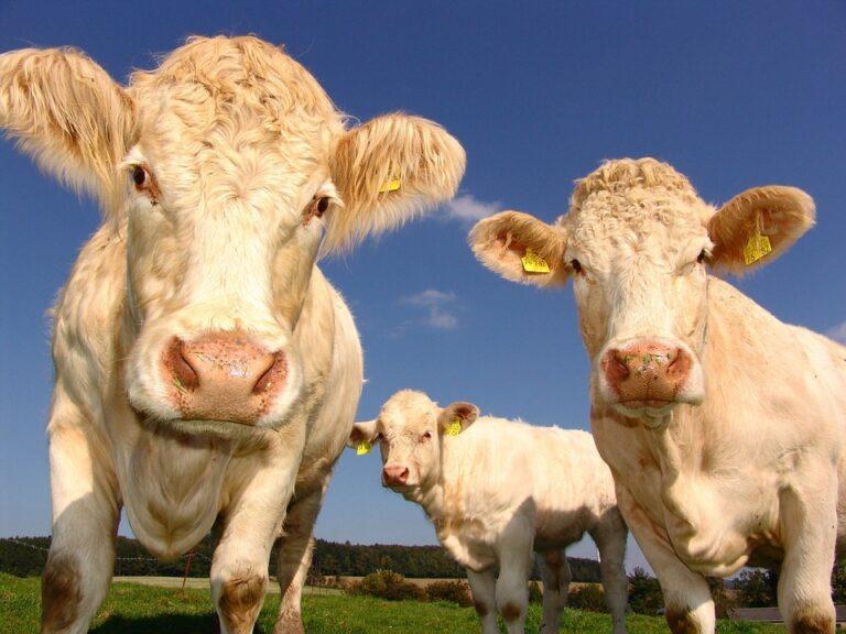 Perché è legale fare abuso degli animali? E perché lo permetti?