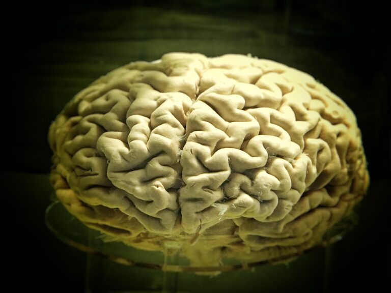 Un cervello cresciuto in laboratorio ha diritti?